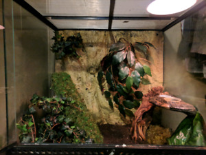 24x18x24 Exoterra tank with 5 year old Crested Gecko.