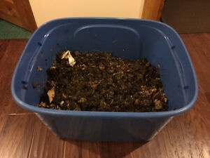 Wiggler Worms COMPOST BIN for $40 !