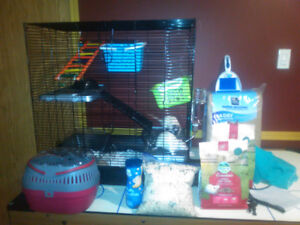 Rats with Cage and accesories for sale