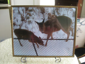 ADORABLE NATURE WILD-LIFE FRAMED PHOTOGRAPH in  NATURAL SETTING