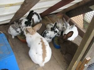 8 Cute Bunnies (1 left...white with grey)