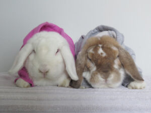 2 lops for sale