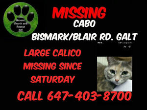 "Missing cat ""Cabo"" Large Calico"