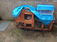 4 month old rabbit and hutch