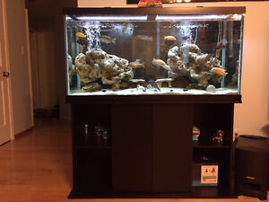 Complete 90 Gallon tank w/ stand, fish and accessories