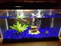 Fish tank and fixins
