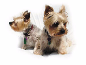 Private Homecare for your pet while you're away!-Small dogs only