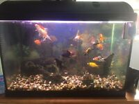 Fish tank open to offers