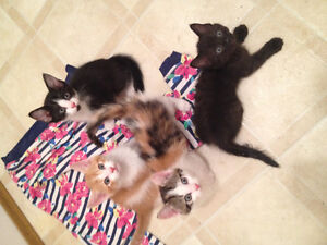4 Kittens to give away!