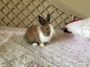 Sweet male bunny up for adoption