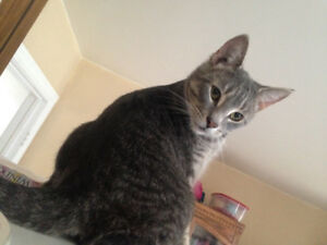 2-year-old male neutered cat
