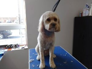 DOGGY STYLE GROOMING IROQUOIS/CHESTERVILLE