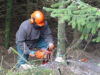 STUMP GRINDING TREE REMOVAL LAWN CARE SELF SERVE QUOTE