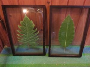 TWO PICTURE FRAMES WITH PRESSED LEAFS