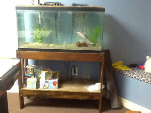Aquarium - 35 gallons with stand