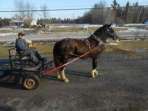 Annual Horse, Tack & Equip. consignment Auction Sale