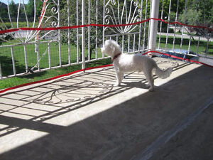 Safety net for balcony for small animals