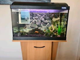 Fluval fish tank