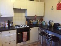 Room To Let In Respectful and Friendly House