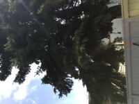 Action Tree Pruning