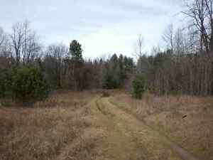 New Listing - Private Wooded Rural Lot close to trout Stream Oakville / Halton Region Toronto (GTA) image 4