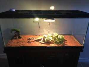 90g reptile tank with accessories