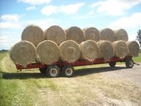 Hay for sheep, alpaca or goats or beef cattle