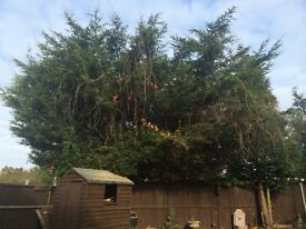 Garden tree branches to be cut back and tided up