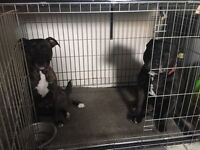 Pair off staff need a home