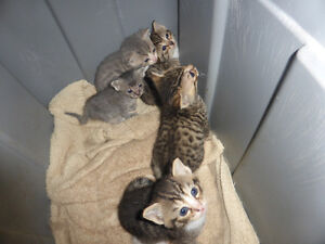 kittens free to good homes , 3 females, 2 males