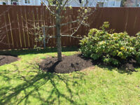 Yard Cleanup, Mulching, Flower beds, edging & more