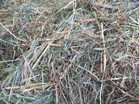 Grass/Timothy/clover mix Small Square Bales For Sale! $5/bale