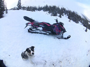 Perfect sled for a girl who wants to send it!!
