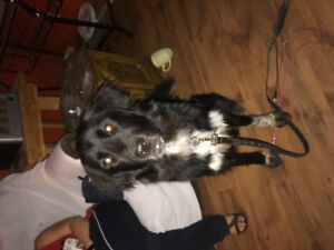 Needed a loving family for this wonderful dog