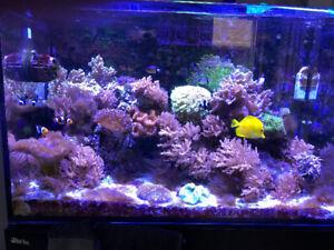 RED SEA MAX E-260 Reef Aquarium – 69-gallon tank