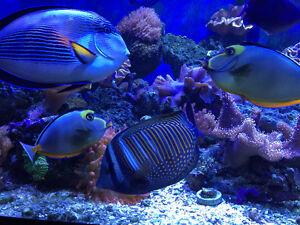 Atlantic Region Reefers Group is back! ( marine coral salt water