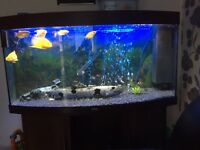 Jewel vision 260 litre bowed tropical fish tank £250