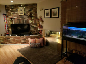 Large room in a 2 bedroom Suite - $890/mo