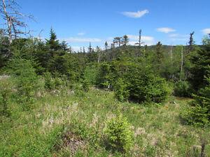 12 ACRE RIVERFRONT ESTATE…181 SALMONIER LINE, HOLYROOD. St. John's Newfoundland image 12