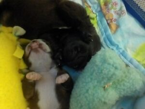 Small Miracles....home for senior and Special need puppies