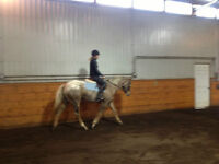 Pony Club, 4H, Open Show, All Around well started 4yo mare