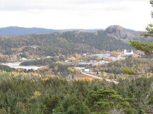 2.5 ACRE BOREAL FOREST ESTATE, PRIVACY GALORE...AVONDALE. St. John's Newfoundland image 11