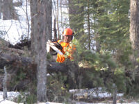 HIRING FOR FORESTRY POSITIONS in Mountain Pine Beetle Operations