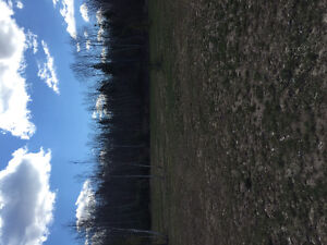 5.16 Acre Land for sale