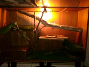 Ball Python Enclosure and stand