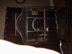 very large bird cage, either big parrot or a few small birds