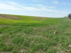 VACANT LAND FOR SALE IN ERIN TOWNSHIP-TWO ACRES