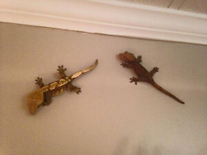 2 male geckos & their habitats & 1 other habitat