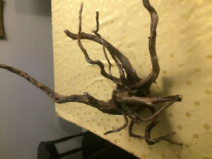 Aquariums driftwood and plant ferts and root tabs
