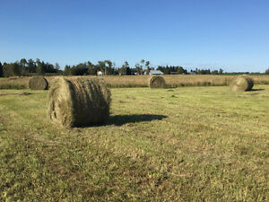 Cattle Hay Bales